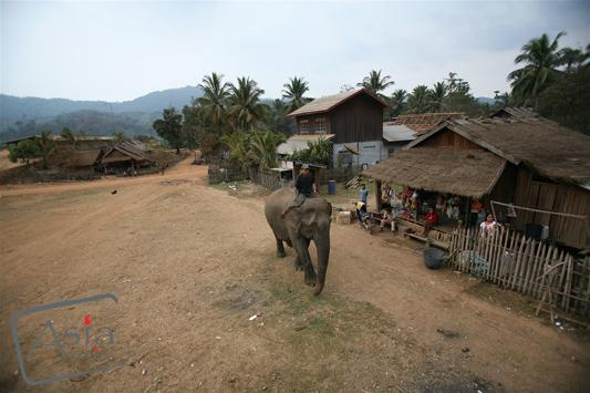 Photo story Asia Motion - CS_elephants_Laos01.JPG