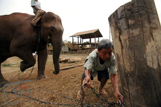 Photo story Asia Motion - CS_elephants_Laos09.JPG