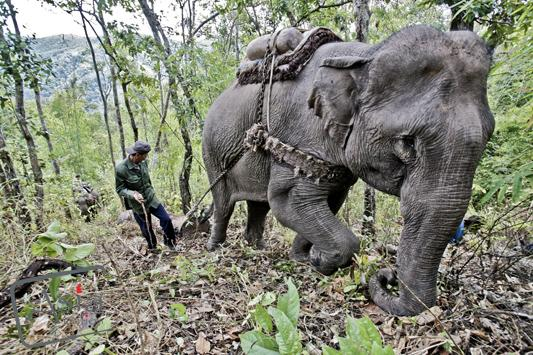 Photo story Asia Motion - CS_elephants_Laos16.jpg