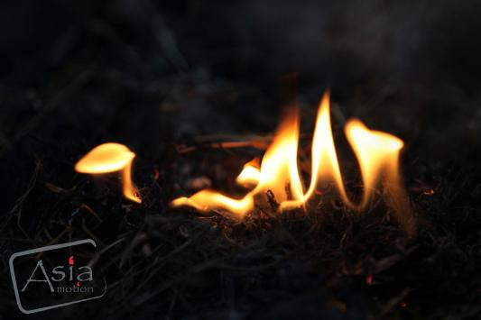 Photo story - Flamed Forest